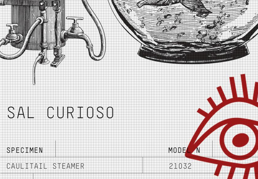 sal curioso_identity_01